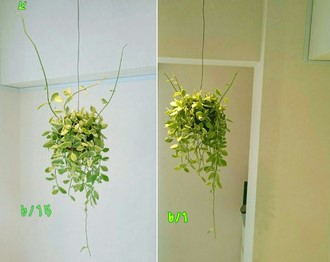 I018208146_349-262 植物.jpg